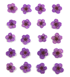 Pressed flowers, purple bridal wreath 20pcs floral art resin craft nail art