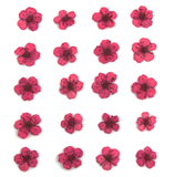 Pressed flowers, mauve bridal wreath 20pcs floral art resin craft nail art