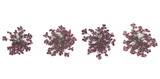 Pressed flowers, purple Queen Anne's lace flower 20pcs floral art, craft