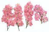 Pressed flowers, pink larkspurs on stalk 10pcs floral art, resin craft
