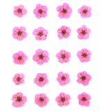 Pressed flowers, pink bridal wreath 20pcs floral art resin craft nail art