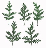 Pressed green silver lace 20pcs for floral art craft scrapbooking