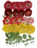 Pressed flowers, mixed pack of roses, larkspur, evening primrose, foliage