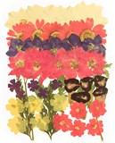 Pressed flowers, larkspurs, daisy, parasol, torenia, verbena foliage