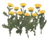 Pressed flowers, Yellow Chrysanthemum with stalk leaves 20pcs