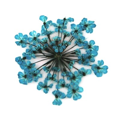 Pressed flowers, turquoise lace flowers 20pcs floral art, craft