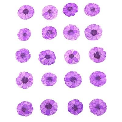 Pressed flowers, small purple chrysanthemum 20pcs floral art, resin craft