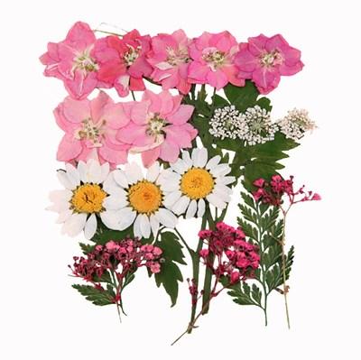 Pressed flowers 20pcs, pink larkspurs, lace flowers foliage mix