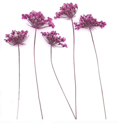 Pressed flowers, mauve lace flowers on stalk 20pcs floral art, resin craft