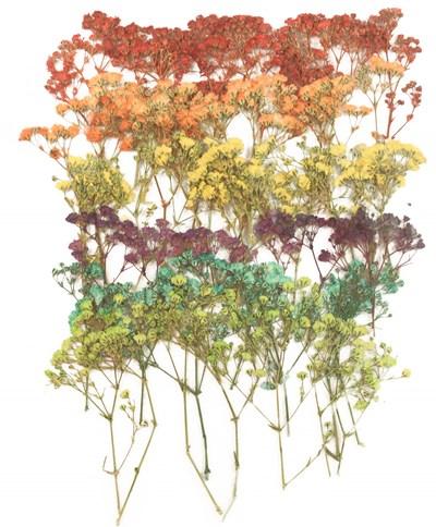 Pressed flowers baby's breath gypsophila red yellow turquoise pink purple orange