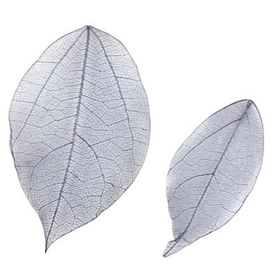 Pressed black leaf 20pcs floral botanical art, resin craft, scrapbooking
