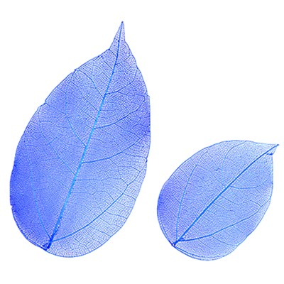 Pressed leaves foliage blue 20pcs floral botanical art, resin craft scrapbooking