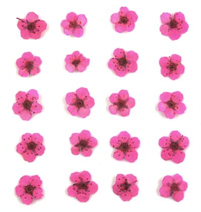 Pressed flowers, dark pink bridal wreath 20pcs floral art resin craft nail art