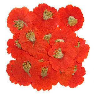 Pressed flowers, orange cosmos 20pcs, floral art, craft, card making