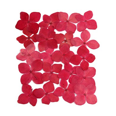 Pressed flowers, cherry pink hydrangea 20pcs floral art, craft