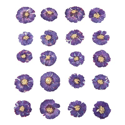 Pressed flowers, small purple chrysanthemum 20pcs floral art, craft