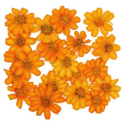 Pressed flowers, orange Zinnia 20pcs