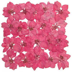 Pressed flowers, pink larkspur 20pcs for art craft card making
