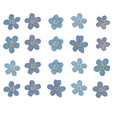 Forget me not pressed flower petal 20pcs for floral art, jewellery, craft