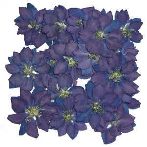 Pressed flowers, blue delphinium 20pcs for floral art, craft, scrapbooking