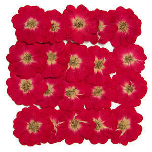 Pressed flower, natural real dried flowers, mini roses 20pcs