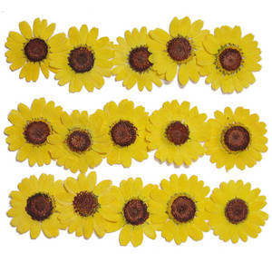 Pressed flowers, natural dried flower. Yellow marguerite 20pcs floral art craft