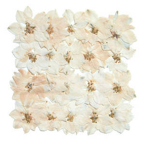 Pressed flower, natural dried white Larkspur 20pcs