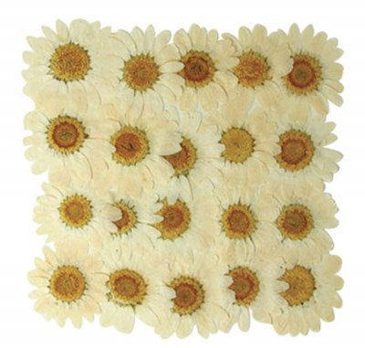 Pressed real flowers, white marguerite 20pcs, daisy floral art craft