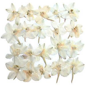 Pressed flowers, natural dried white larkspur 20pcs floral art