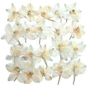 Pressed flowers, natural dried white larkspur 20pcs floral art