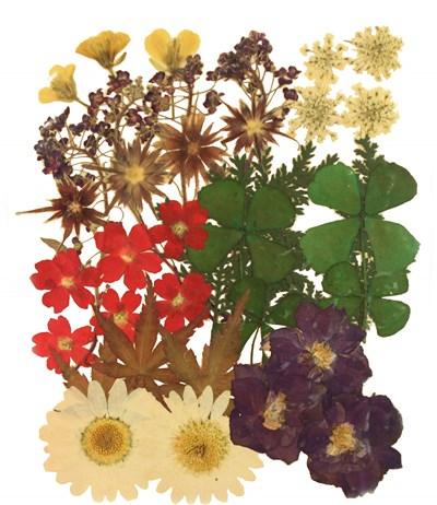 Pressed flowers, verbena rapeseed flower star flower alyssum lace flower foliage