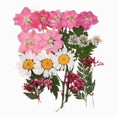 Pressed flowers, larkspurs, marguerite daisy, gypsophila, lace flowers foliage