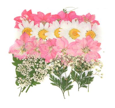 Pressed flowers foliage mix, larkspurs lace flower, baby's breath gypsophila