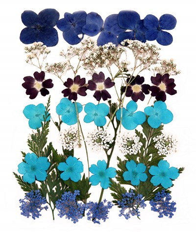 Pressed flowers mix in blue theme, hydrangea, verbena, baby's breath gypsophila,