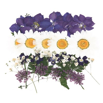 Pressed flowers foliage mix, larkspur marguerite verbena gypsophila lace flower