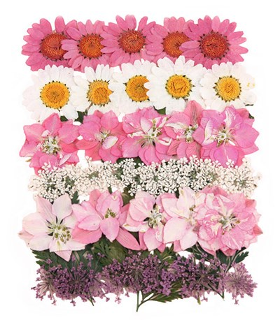 Pressed flowers mixed pack, marguerite daisy, larkspur, lace flowers, foliage
