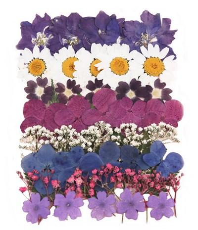 Pressed flowers larkspur marguerite daisy verbena hydrangea gypsophila foliage