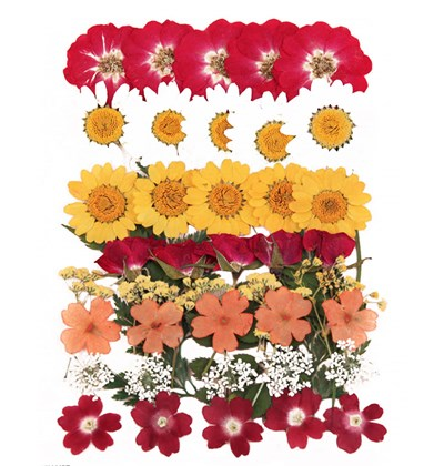 Pressed flowers mix, red rose marguerite daisy verbena lace flower gypsophila
