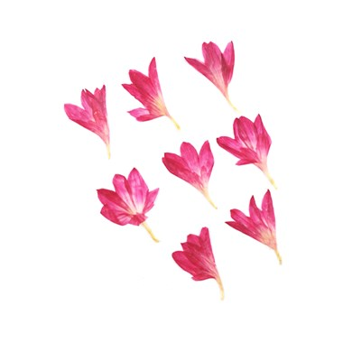 Pressed flowers, mauve cornflower 20pcs floral art, resin craft, nail art
