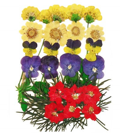 Pressed flowers, marguerite, pansy, larkspur foliage