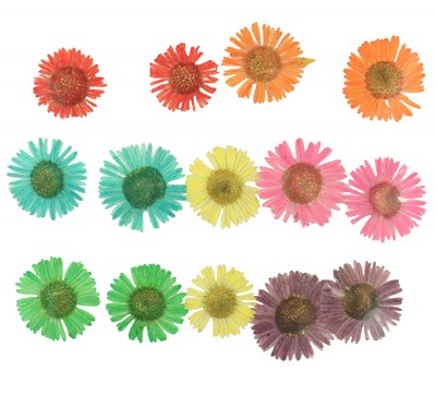 Pressed flowers daisy fleabane, red orange pink yellow turquoise green purple