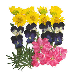 Pressed flowers, marguerite pansy larkspur foliage