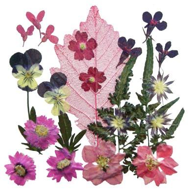 Pressed flowers 1 pack, pansy, lobelia, rodanthe, star flower, verbena, foliage