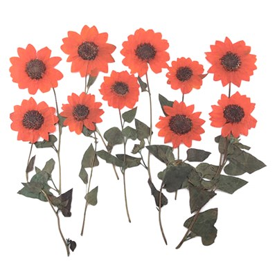 Pressed flowers, dark orange mini sunflower 10pcs