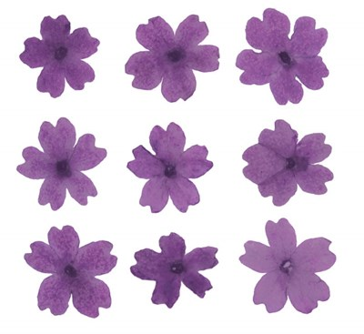 Pressed flowers, purple verbena 20pcs floral art craft card making