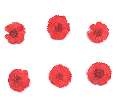 Pressed flowers, real red small chrysanthemum 20pcs