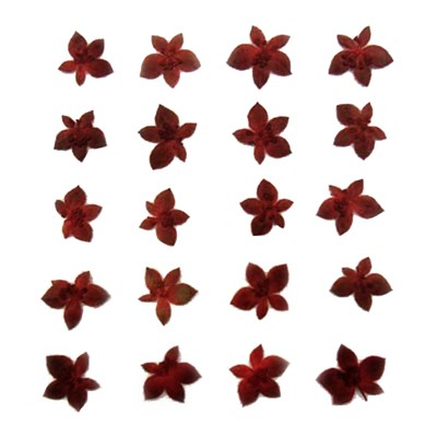 Pressed red Bupleurum flower throw wax 20pcs floral art craft jewellery making