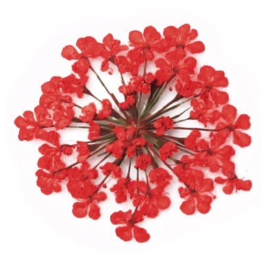 Pressed flowers, red lace flower 20pcs for art craft card making scrapbooking