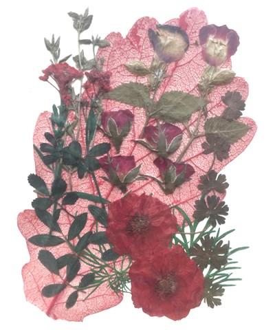 Pressed flowers, rose, rose buds, alyssum, torenia, foliage red theme