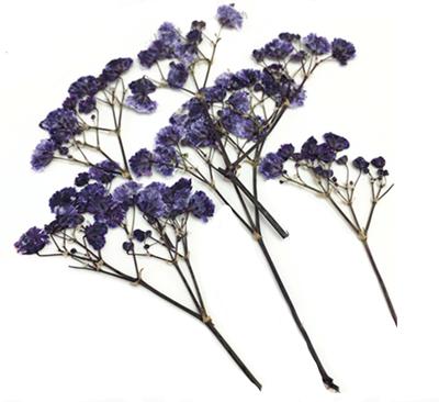 Pressed flowers, navy baby's breath gypsophila 16pcs floral art craft
